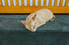 睡觉在商店角落的橙色猫 免版税库存照片