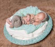 睡觉在圆的篮子的新出生的婴孩 免版税图库摄影