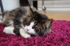 睡觉在地毯的猫 免版税库存照片