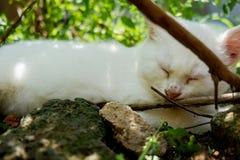 睡觉在地面上的小猫 免版税库存图片