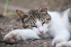 睡觉在地面的猫 图库摄影