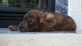 睡觉在壁炉附近的逗人喜爱的小狗 免版税图库摄影