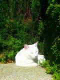 睡觉在夏天下午的懒惰猫 库存照片