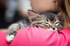睡觉在她的肩膀的一只逗人喜爱的小猫的画象 库存图片