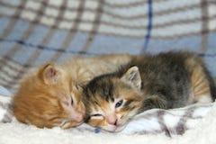 睡觉在姐妹tortie torbie k旁边的公橙色平纹小猫 免版税库存图片