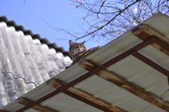 睡觉在屋顶的猫 库存照片