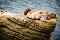 睡觉在岩石的海狮 图库摄影