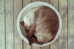 睡觉在巢的猫 库存图片