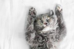 睡觉在床上的逗人喜爱的猫 免版税库存图片