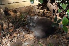 睡觉在庭院里的野生猫 免版税库存照片