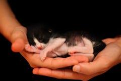 睡觉在手上的甜新出生的猫 图库摄影