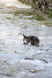 睡觉在托斯卡纳(意大利)的猫 免版税库存图片