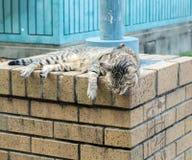 睡觉在放松的难看的东西砖石头柱子的逗人喜爱的老虎(平纹)猫在太阳下 图库摄影
