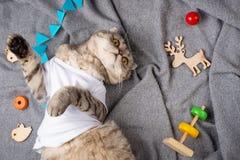 睡觉在有儿童的玩具的一白色T恤的猫在灰色格子花呢披肩 晚安和温暖的梦想,顶视图 库存图片