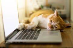 睡觉在木书桌上的一台黑屏膝上型计算机的猫 免版税库存图片