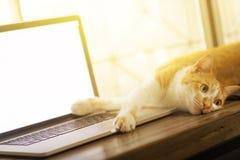 睡觉在木书桌上的一台黑屏膝上型计算机的猫 免版税库存照片