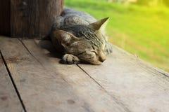 睡觉在木地板上的晚上的逗人喜爱的猫 图库摄影