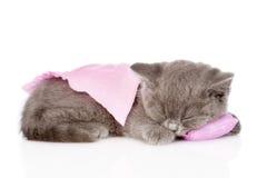 睡觉在枕头的逗人喜爱的小小猫 背景查出的白色 免版税库存照片
