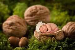 睡觉在核桃的婴孩 库存图片