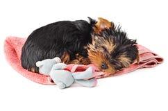 睡觉在桃红色毛巾的小狗 免版税库存图片