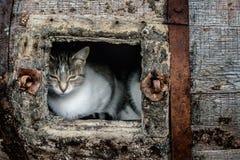 睡觉在桶的猫 免版税库存照片
