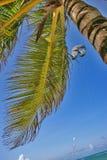 睡觉在棕榈下 库存照片