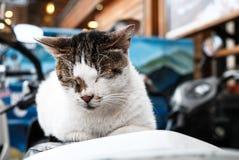 睡觉在椅子的一只逗人喜爱的猫 免版税库存照片