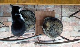 睡觉在椅子的三只逗人喜爱的小猫 库存照片
