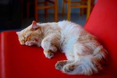 睡觉在椅子的逗人喜爱的猫 免版税库存图片