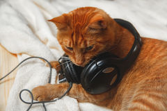 睡觉在毯子的甜姜猫 库存图片