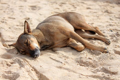 睡觉在海滩的逗人喜爱的狗 免版税库存图片