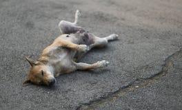 睡觉在滑稽的位置的街道上的无家可归的狗 免版税图库摄影