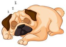 睡觉在白色背景的小犬座 皇族释放例证