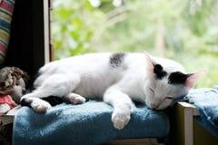 睡觉在窗口的一只逗人喜爱的黑白猫 库存图片
