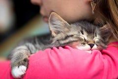 睡觉在肩膀的一只逗人喜爱的小猫的画象 免版税库存图片