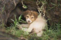 睡觉在自然洞的无家可归的小狗或炉渣狗寻找收养, 免版税图库摄影