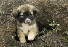 睡觉在自然洞的无家可归的小狗或炉渣狗寻找收养, 库存图片