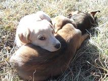 睡觉在草的小狗 免版税图库摄影