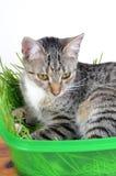 睡觉在草的小猫 免版税库存图片
