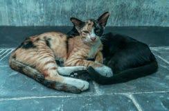睡觉在街道上的两只猫 库存照片