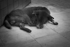 睡觉在街道上的流浪狗 库存照片