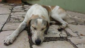 睡觉在街道上的狗 免版税库存照片
