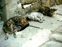 睡觉在街道上的猫在午睡期间 库存图片