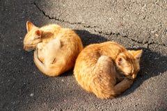睡觉在街道的两只小猫 免版税库存照片