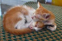 睡觉在街道的两只逗人喜爱的小猫 库存图片