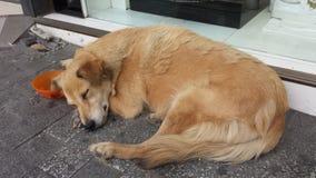睡觉在街道的红色狗 免版税库存照片