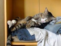 睡觉在衣裳的猫 免版税库存照片