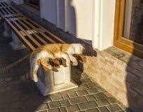 睡觉在长凳猫 免版税图库摄影