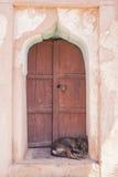 睡觉在门步的狗 免版税库存照片