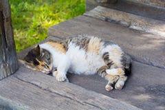 睡觉在门廊的逗人喜爱的猫 免版税库存图片